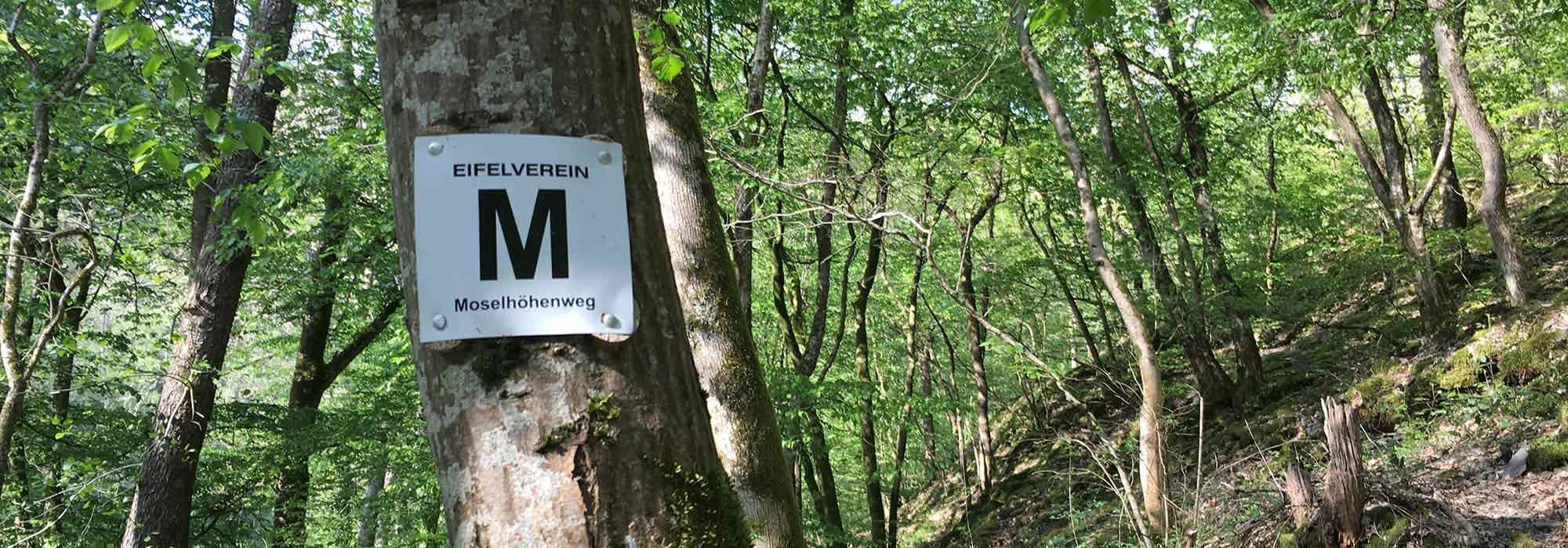 IMG_1235-Moselhoehenweg