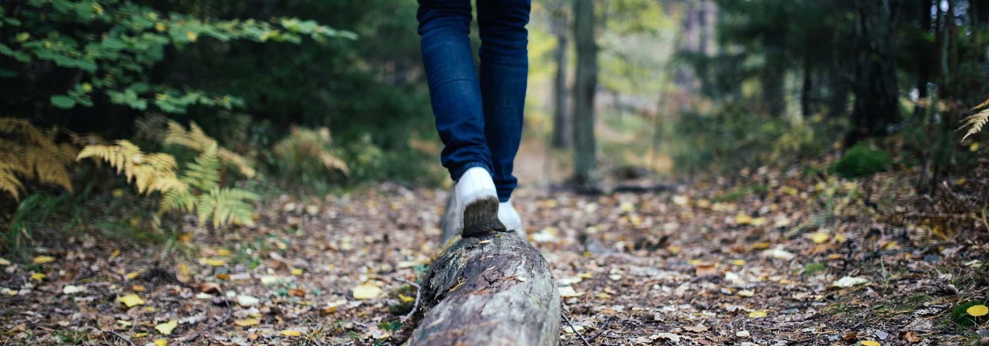 wood-691629